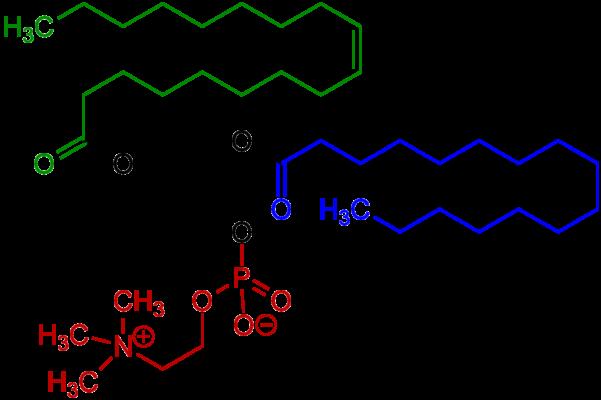 lecithin có vai trò gì trong chế biến thực phẩm