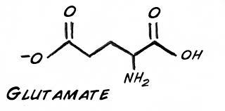 glutamate là gì chuyên gia trả lời