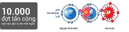 chất chống oxy hóa là gì