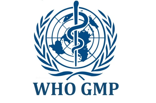 GMP WHO là gì