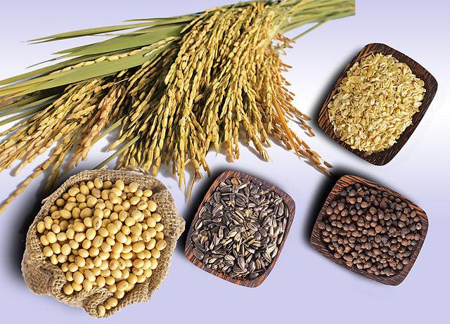 cách bảo quản cám gạo