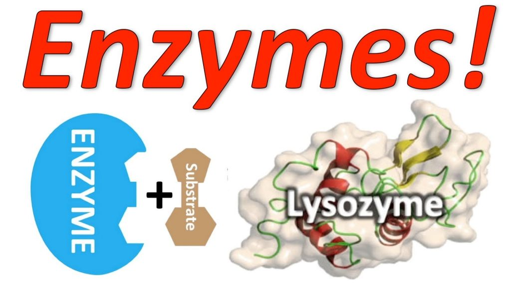 Tìm hiểu thêm về ứng dụng của enzym TG và một số enzym khác
