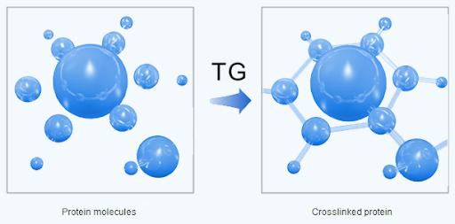 Kết quả hình ảnh cho enzyme TG