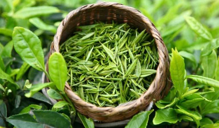 hương liệu trà xanh