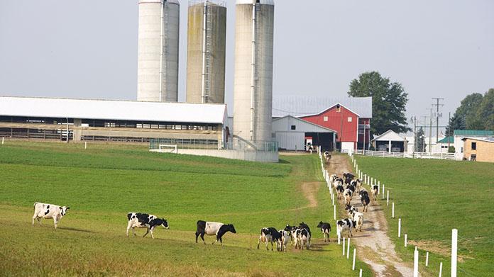 Một trang trại bò sữa