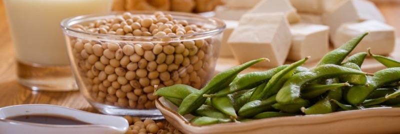 Soy Protein – Công dụng và tác dụng của nguồn đạm thực vật bổ dưỡng Shark  Supplement - Hệ thống phân phối sỉ lẻ thực phẩm bổ sung