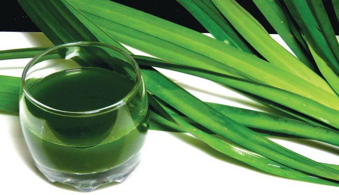 Cách sử dụng tinh dầu lá dứa chế biến thực phẩm - Tinh Dầu Thiên Nhiên Ấn Độ